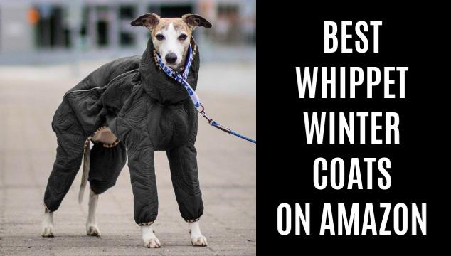 Two whippet wearing Hurtta Winter Dog Coats