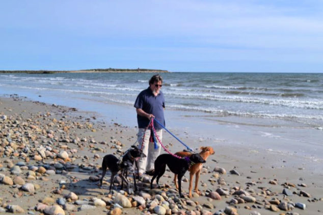 Man walking whippets on a beach.