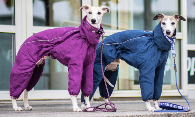 Two whippets wearing Hurtta winter dog coats