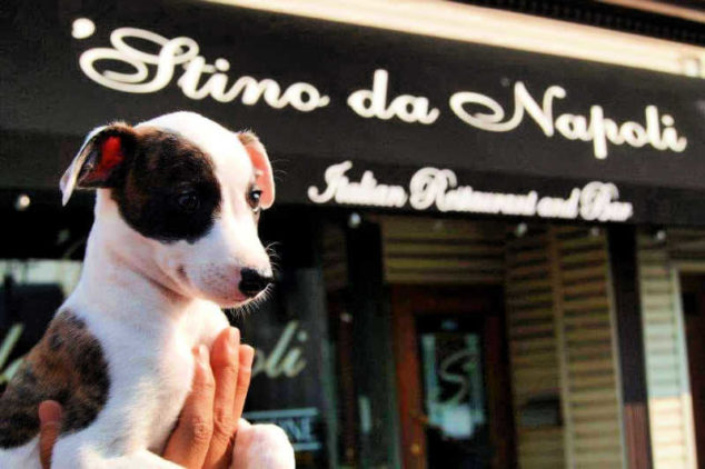 Whippet puppy in front of a restaurant.