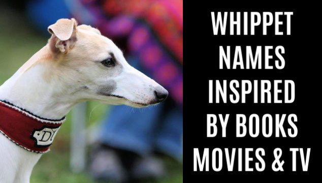 Whippet with a TV inspired name