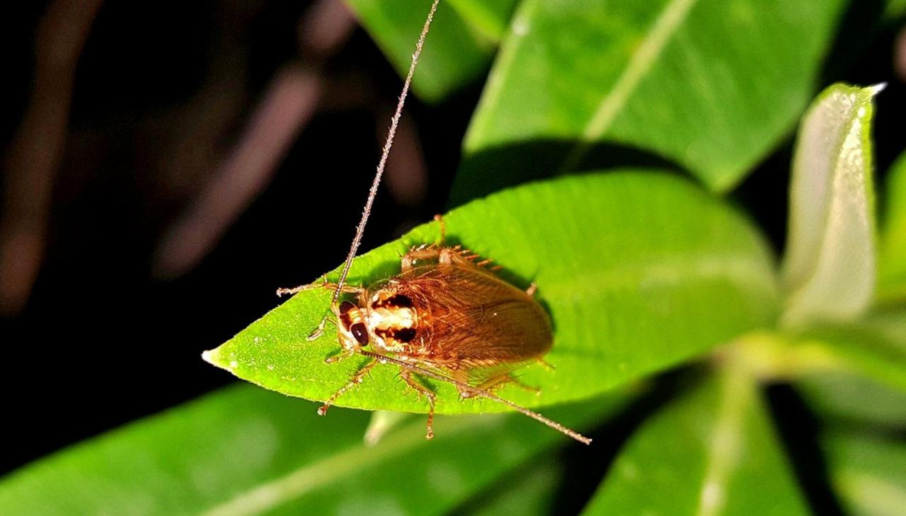 Cockroach on a leaf