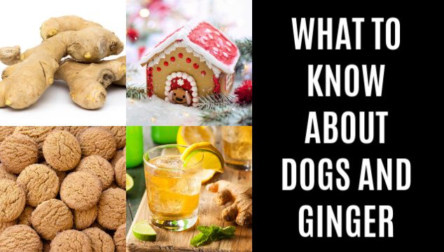 photo collage of ginger foods