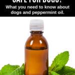 peppermint oil in a bottle between peppermint leaves