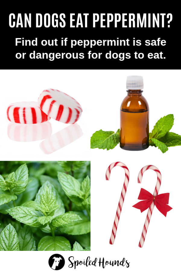 peppermint candy, oil, plant, and candy canes