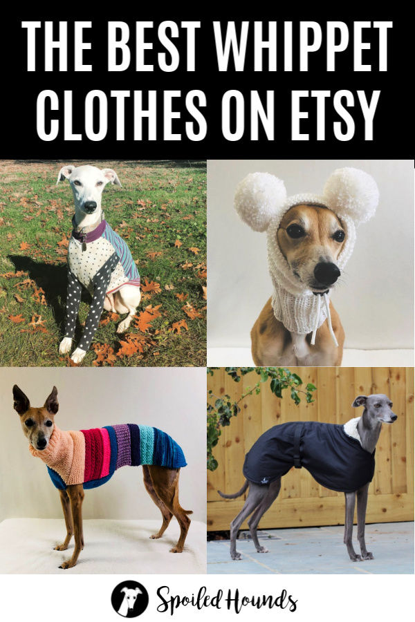 Collage of whippets wearing dog clothes and hats.