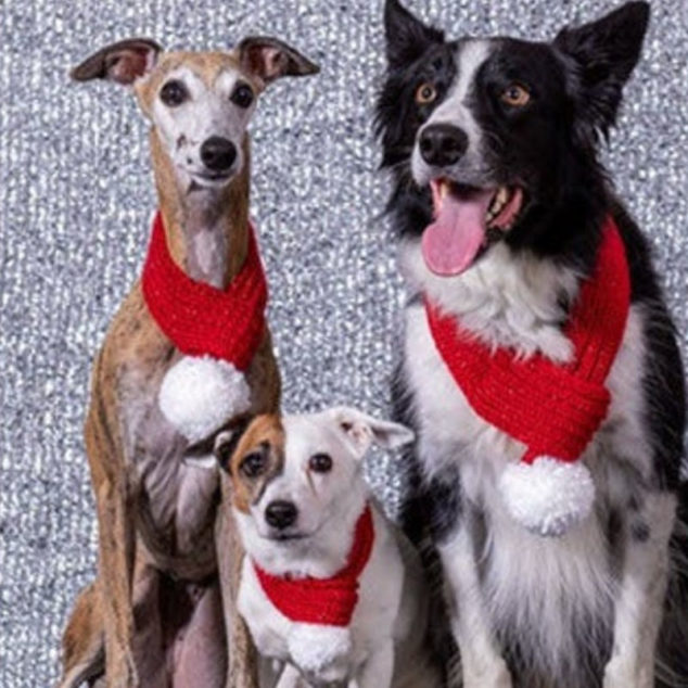 three dogs wearing knitted holiday scarves