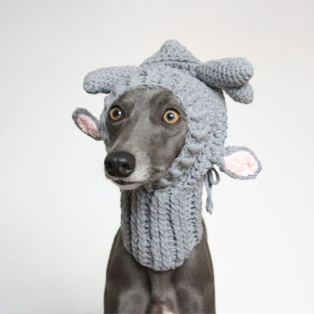 whippet wearing a knitted dog hat