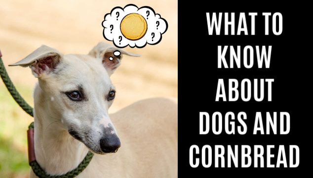 dog wondering about cornbread
