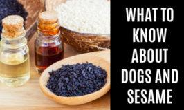 sesame seeds and small bottles of sesame oils