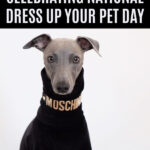 whippet wearing a designer dog outfit