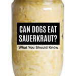 jar of sauerkraut