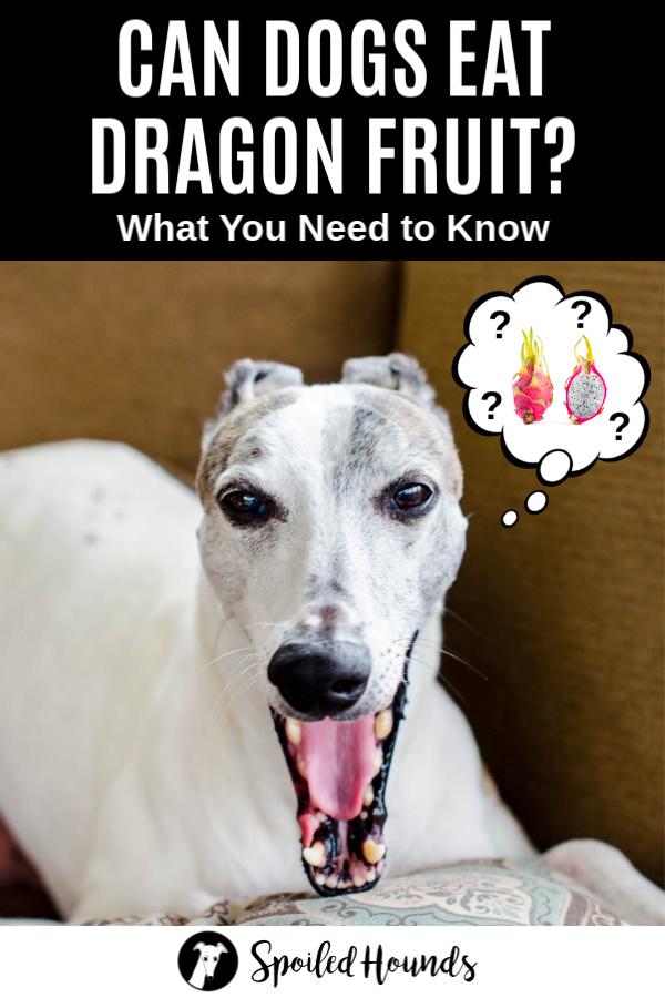 dog wondering about dragon fruit