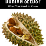 durian fruit with seeds