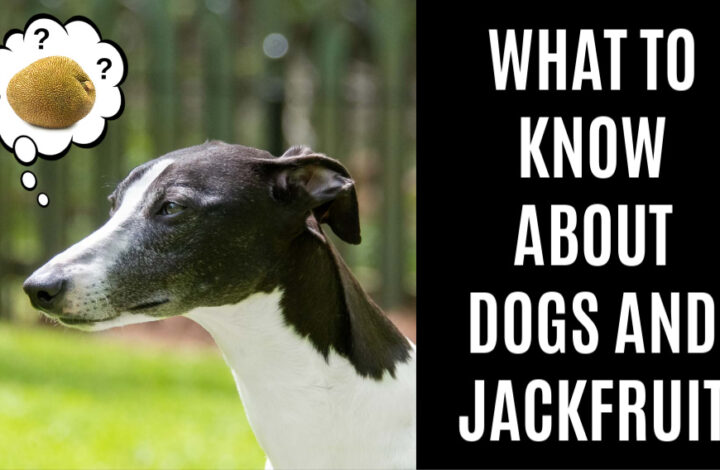 black and white dog wondering about jackfruit
