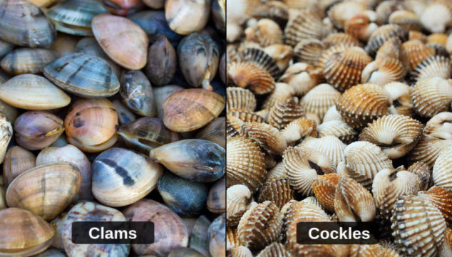 collage of clams and cockles