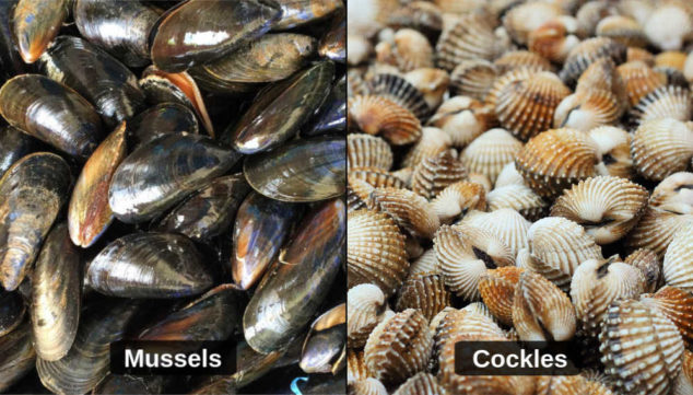 collage of mussels and cockles