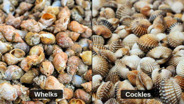 collage of whelks and cockles