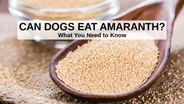 amaranth seeds in a wooden spoon and bowl