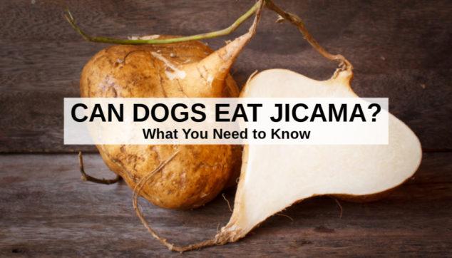 fresh raw jicama