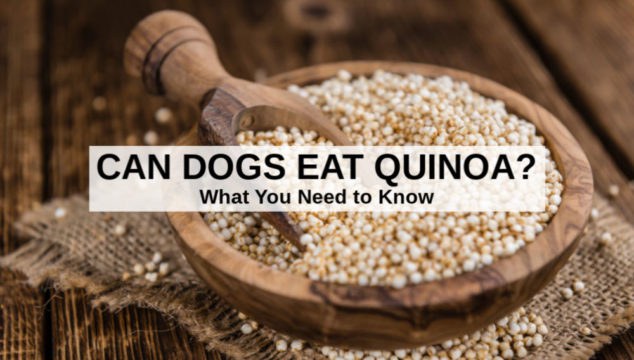 quinoa in a wood bowl and scoop