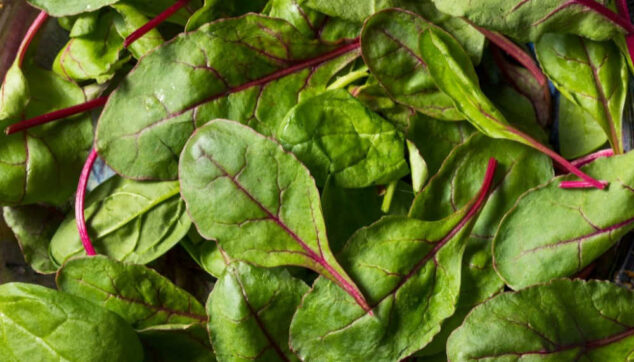fresh baby beet greens