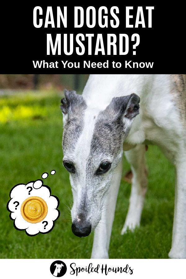 dog wondering about mustard