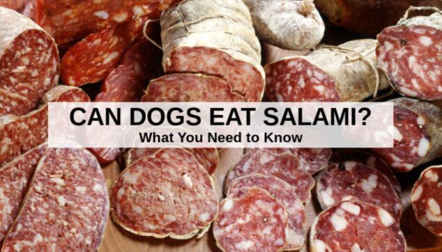 a variety of salami sausages