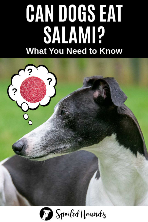 a dog wondering about salami