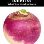 a fresh turnip