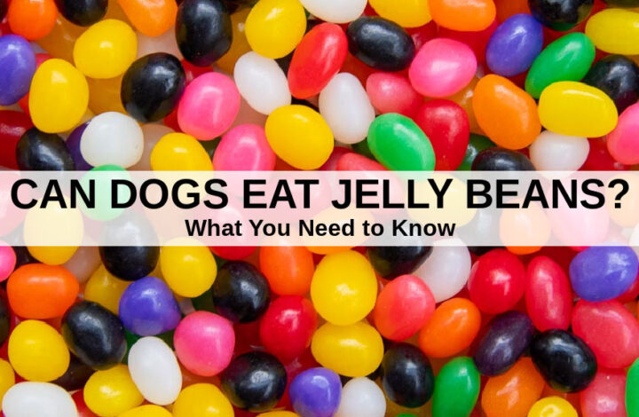 a pile of jelly beans