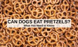 a bunch of mini hard pretzels