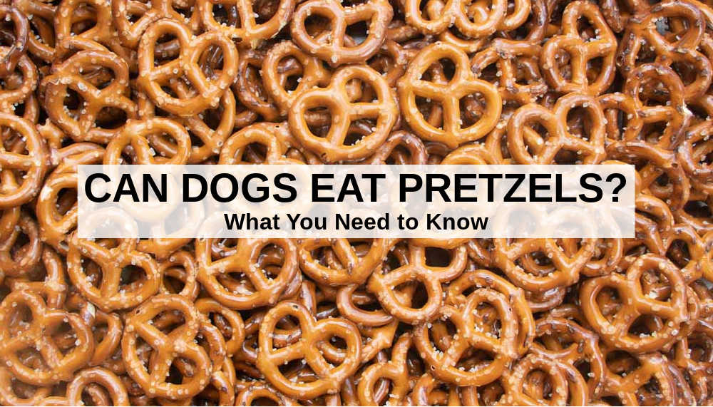 Can Dogs Eat Pretzels? What To Know