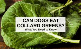 raw collard green leaves