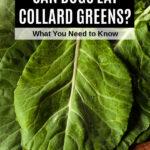 fresh collard green leaves