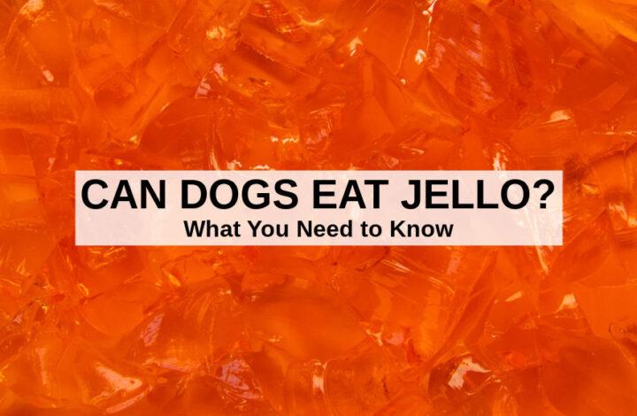 closeup photo of orange Jello gelatin