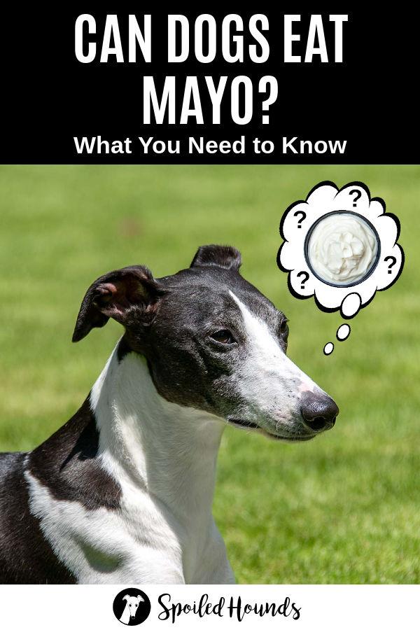 dog wondering about mayo