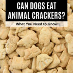 a bunch of animal crackers