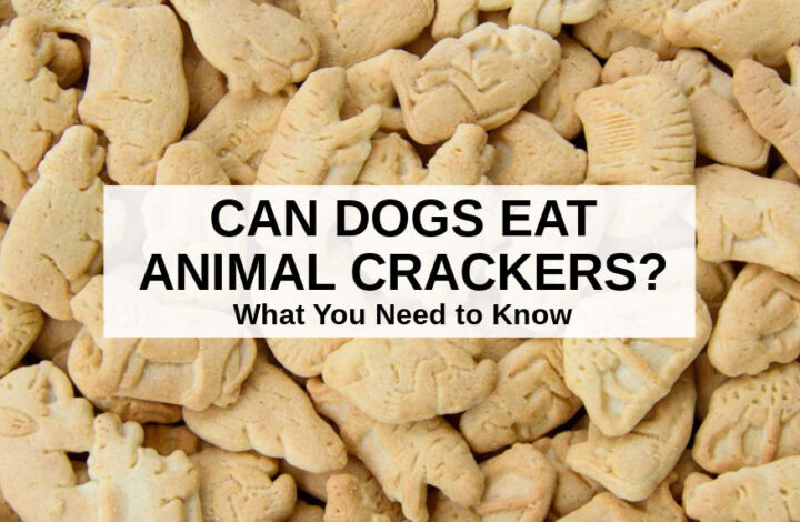 a pile of animal crackers