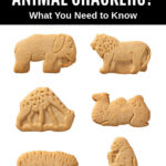6 animal crackers