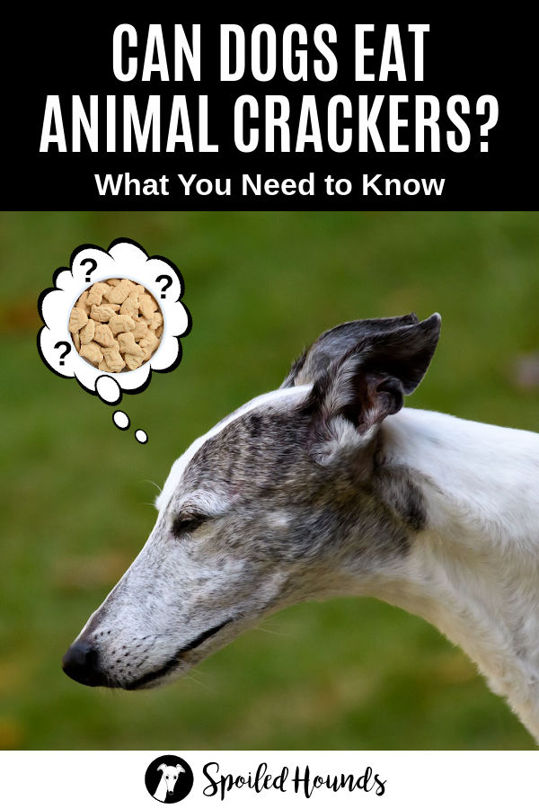 dog wondering about animal crackers