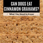 a row of cinnamon graham crackers