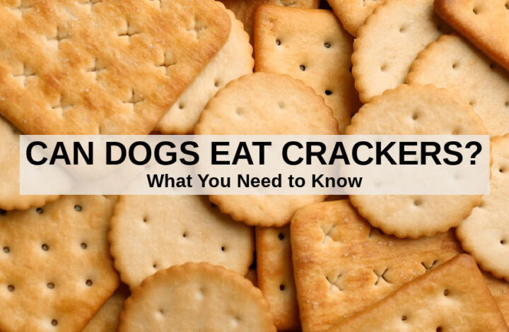 a pile of crackers