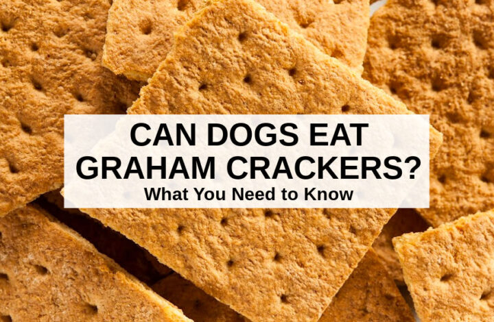 a bunch of graham crackers