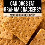 a pile of graham crackers
