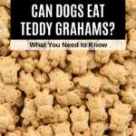a pile of teddy grahams