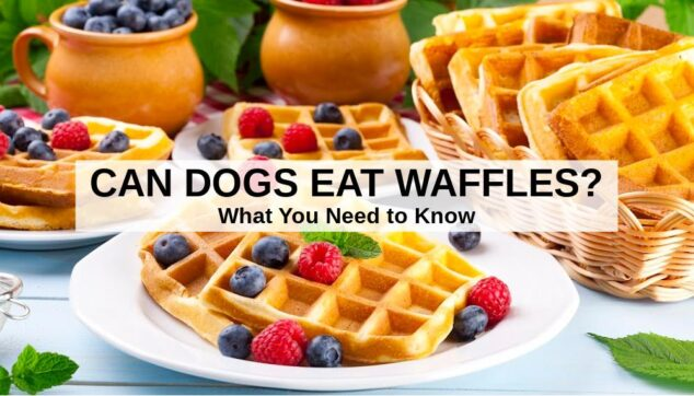 waffles on a plate and in a basket