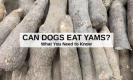 a bunch of Ghana white yams