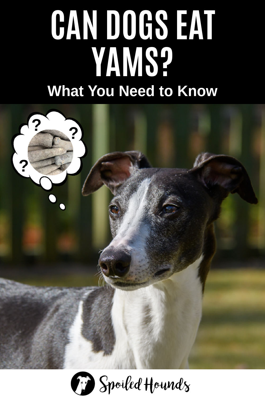 dog wondering about yams