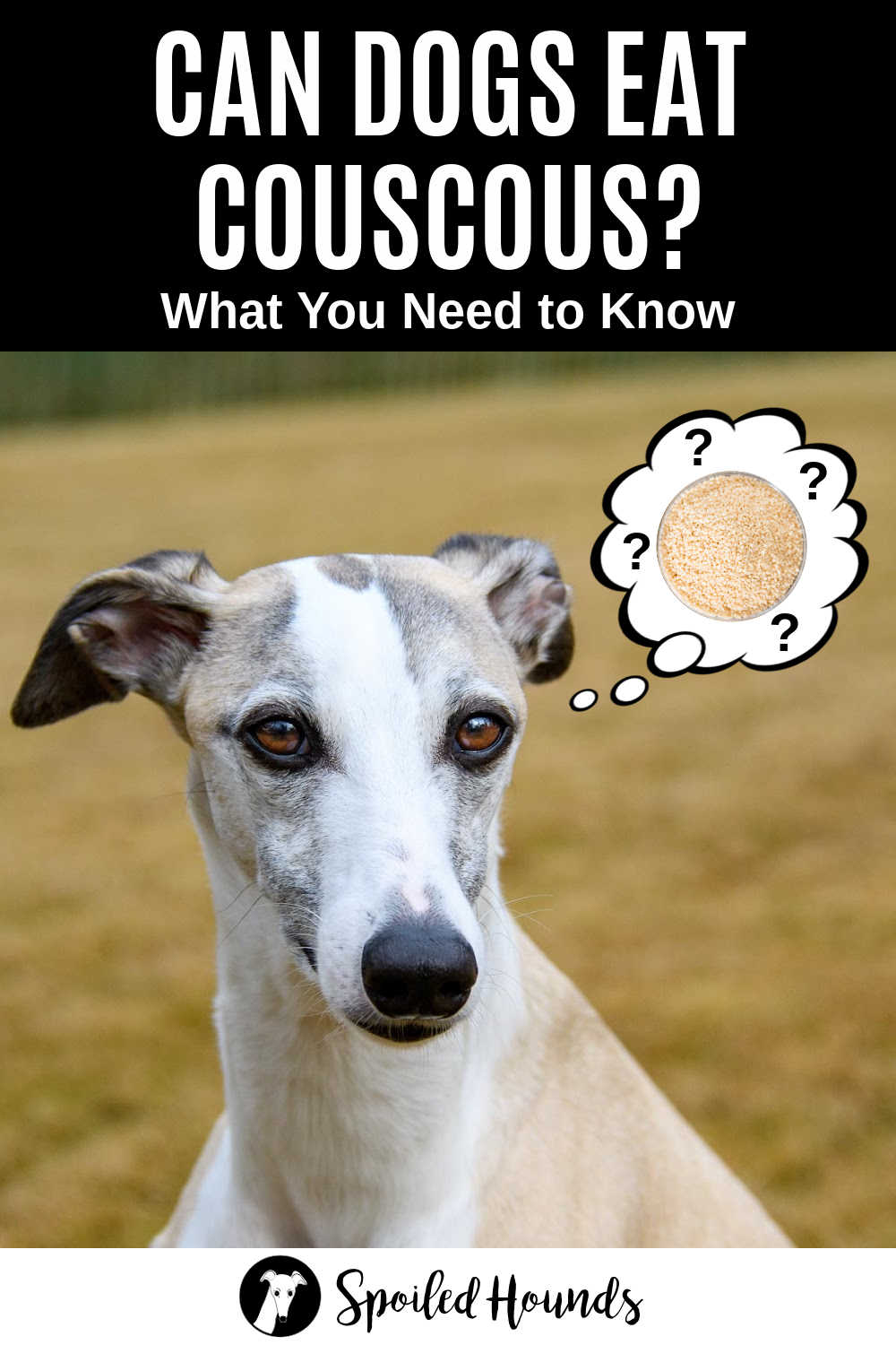 whippet dog wondering about couscous